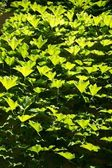 All green leaves — Stock Photo