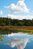 Forrest pond — Stock Photo