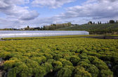 Greenhouse nursery, Oregon. — Stock Photo