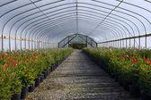 Greenhouse nursery. — Stock Photo