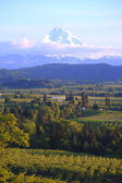 Hood River valley OR. & Mt. Hood. — Stock Photo
