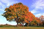 Autumn colors. — Stock Photo