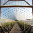 Greenhouse plant nursery, Oregon - Stock Photo