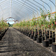 Greenhouse plant nursery, Oregon — Stock Photo #6074995