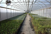 Greenhouse plant nursery, Oregon — Stock Photo