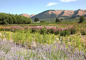 Hood River Oregon garden and hills. — Stock Photo
