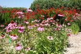 花园里的花. — 图库照片