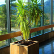 Indoor plant at Bonneville, Oregon. - Stock Photo
