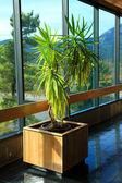 Indoor plant at Bonneville, Oregon. — Stock Photo