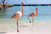 Flamingos at the beach — Stock Photo