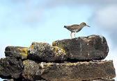 Birds restplace — Stock Photo