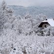 Winter in Carinthia — Stock Photo