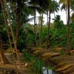 ������, ������: Rural scenery in Southeast Asia