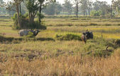 Field in north-eastern Thailand — Stock Photo