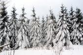 Wintertime — Stock Photo