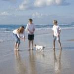 família brincando com cachorro na praia — Foto Stock