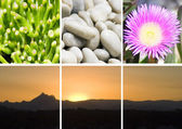 Nature Montage of Mountains pebbles and flowers — Stock Photo