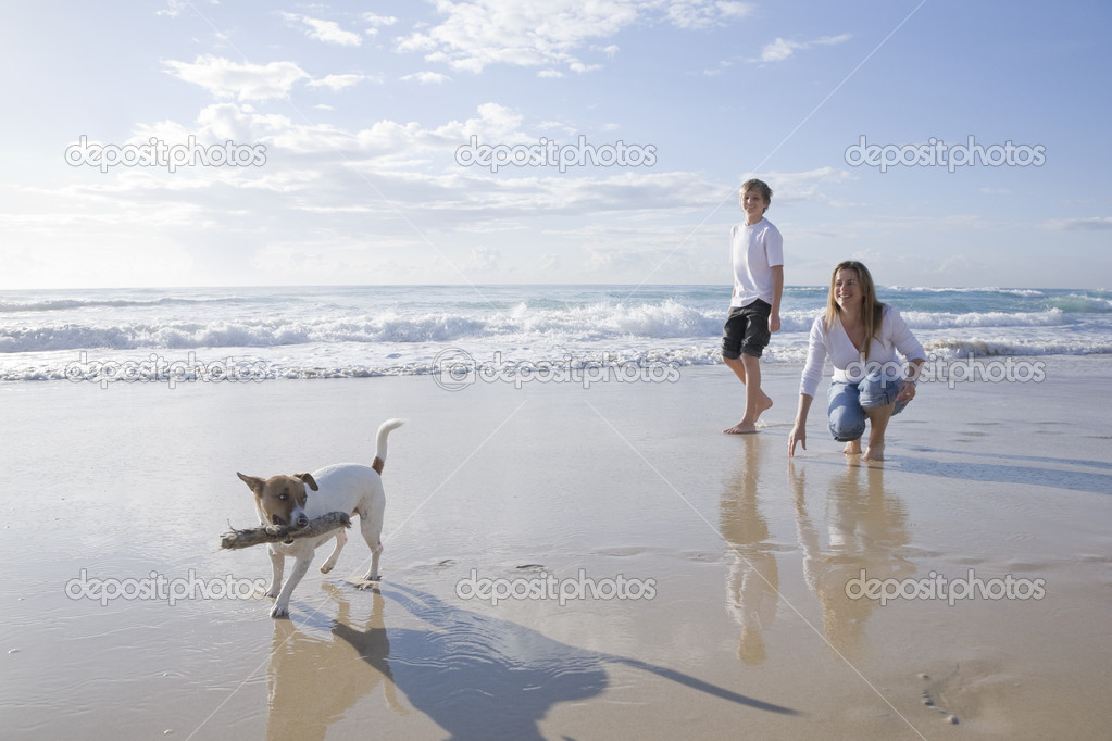 Family playing with dog on the beach  Stock Photo #5788563
