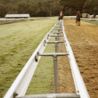 Two horses walking on the race track — Stock Photo
