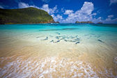 King Fish at the beach Lord Howe Island Australia — Stock Photo