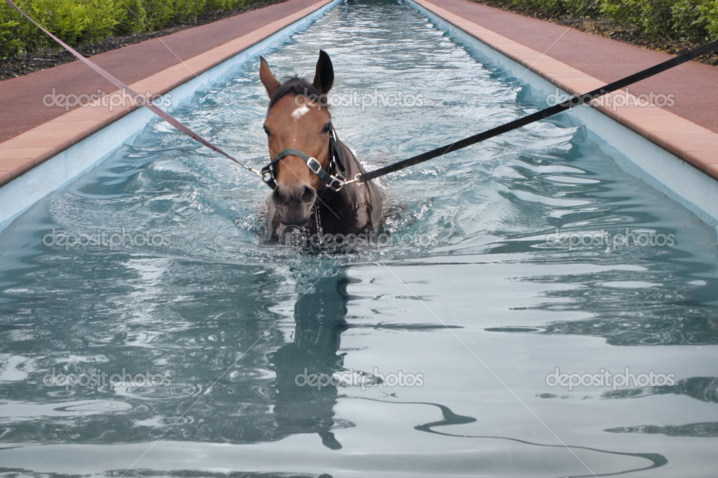 Swimming horse in horse 39 s swimming pool stock photo for Show pool horse racing