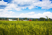Field with Blurry Farm Buildings in the background — Stock Photo