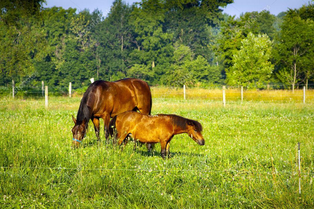 Piccolo cavallo fattoria americana foto stock maxym for Piani di fattoria americana
