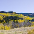 Autumn Landscape in Colorado - ストック写真
