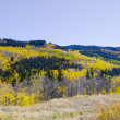 Autumn Landscape in Colorado - Photo