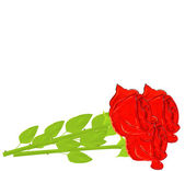 Vector realistic red rose isolated on white background. — Stock Vector