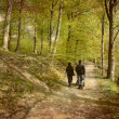 Family walk in the wood — Stock Photo