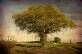 Old Oak tree in the field — Stock Photo