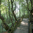 Walkway in the forest — Stock Photo