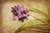 Vintage Orchid. — Stock Photo