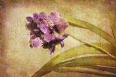 Vintage orkide. — Stok fotoğraf
