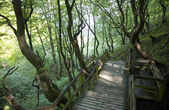 Walkway in the forest — Stockfoto