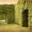 Stock Photo: Hedges and room