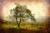 Piemonte árvore retrô — Fotografia Stock