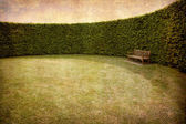 Hedges and bench — Stock Photo