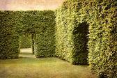 树篱和室 — 图库照片