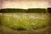 Prairies et haies — Photo