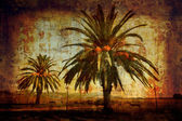 Date palms by Lake Puccini — Stock Photo
