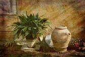 Tuscan rural garden — Stock Photo
