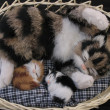 Cat with kittens — Stock Photo #6089632