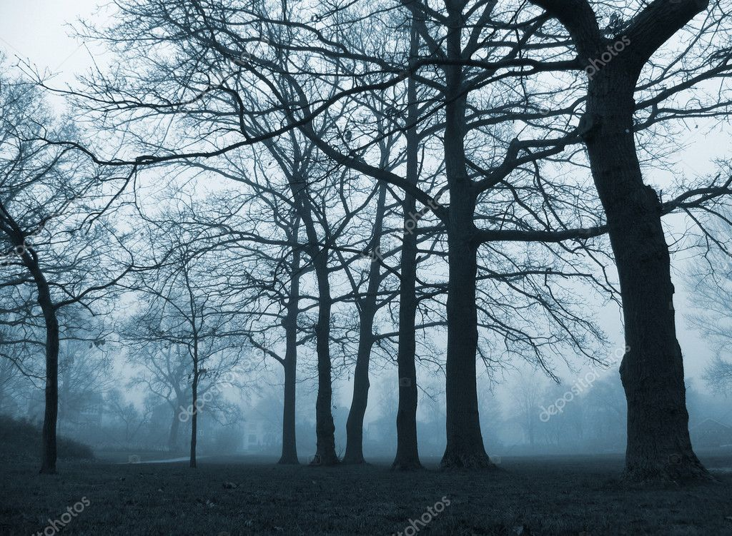 A calm, foggy November afternoon in the park around dusk. — Stock Photo #6089630