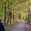 Stock Photo: Autumn walk
