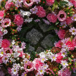 Pink garland — Stock Photo #6574258