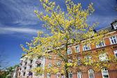 Kasaba ilkbaharda — Stok fotoğraf