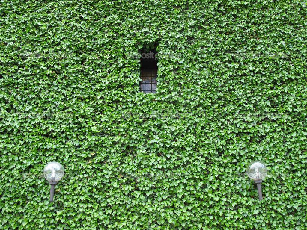 Facade covered all over with Ivy - Copenhagen, Denmark. — Stock Photo #6573850