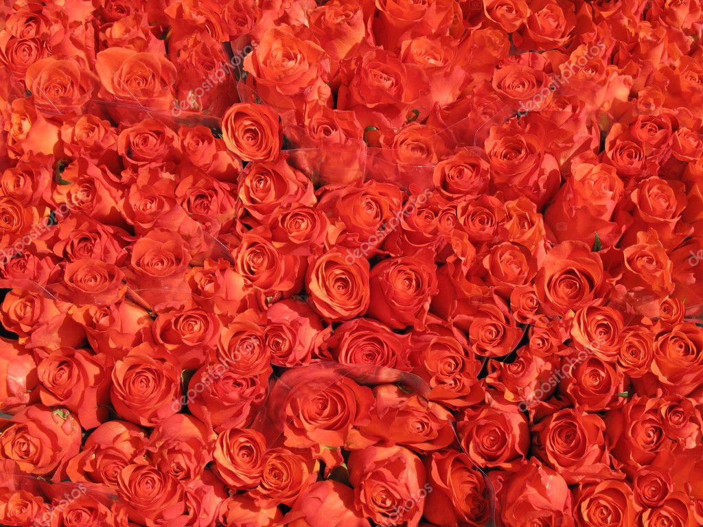 Bunches of red roses for sale - Denmark. — Stock Photo #6573853